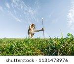 lisle  il   july 7th  2018  joe ... | Shutterstock . vector #1131478976