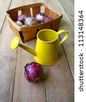 Basket with the bulbs of hyacinths and yellow watering-can on a wooden table - stock photo