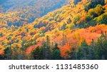 autumn landscape in white... | Shutterstock . vector #1131485360