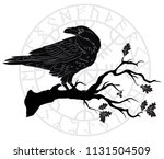 black crow sitting on a branch... | Shutterstock .eps vector #1131504509