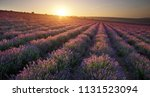 meadow of lavender at sunset.... | Shutterstock . vector #1131523094