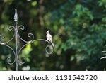 chickadee titmouse songbird... | Shutterstock . vector #1131542720