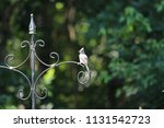 chickadee titmouse songbird... | Shutterstock . vector #1131542723