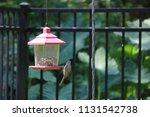 chickadee titmouse songbird... | Shutterstock . vector #1131542738