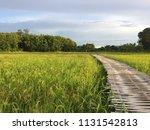 bamboo walk way | Shutterstock . vector #1131542813