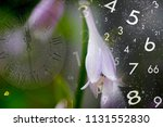 nature  time and numerology | Shutterstock . vector #1131552830