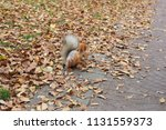 squirrel hiding meal in a park | Shutterstock . vector #1131559373