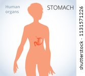 the location of the stomach in... | Shutterstock . vector #1131571226