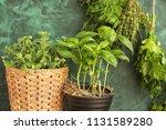 pots with fresh herbs near... | Shutterstock . vector #1131589280