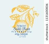 orange branch illustration.... | Shutterstock .eps vector #1131600836
