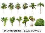 Coconut Palm Trees Bamboo Banana - Fine Art prints