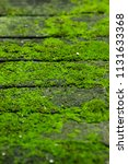 green moss growing on damp... | Shutterstock . vector #1131633368