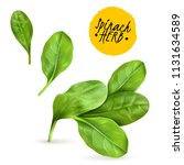 fresh baby spinach leaves... | Shutterstock .eps vector #1131634589