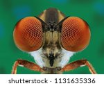close  up view of the eyes of a ... | Shutterstock . vector #1131635336