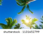 coconut palm trees  beautiful... | Shutterstock . vector #1131652799
