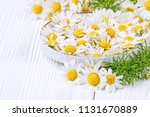fresh chamomile flowers in a... | Shutterstock . vector #1131670889