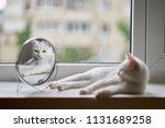 cat looks in the mirror | Shutterstock . vector #1131689258