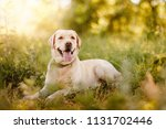 active  smile and happy... | Shutterstock . vector #1131702446