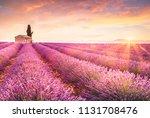 lavender fields at sunrise near ... | Shutterstock . vector #1131708476