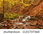 autumn stream in the forest ... | Shutterstock . vector #1131737360