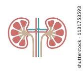 icon human organ kidneys. sign...   Shutterstock .eps vector #1131753593