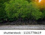 group of monkeys in mangrove... | Shutterstock . vector #1131778619