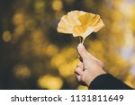 autumn yellow ginkgo leaves on... | Shutterstock . vector #1131811649