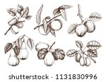 vintage collection of ripe... | Shutterstock .eps vector #1131830996