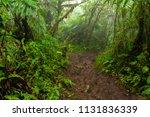path through the rainforest ... | Shutterstock . vector #1131836339