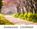 beautiful cherry blossom ... | Shutterstock . vector #113185663
