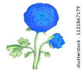 beautiful blue flower peony... | Shutterstock .eps vector #1131867179