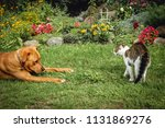Stock photo young dog tries to play with cat in the garden 1131869276