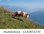 free cow on the mountain | Shutterstock . vector #1131872270