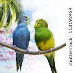 Two Budgerigars Perching On A...