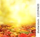 autumn background | Shutterstock . vector #113194633