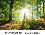 Autumn Dusk In Forest