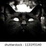 high contrast black and white cat portrait - stock photo