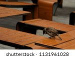 bird sits on a wooden table... | Shutterstock . vector #1131961028