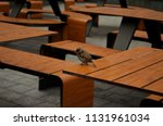bird sits on a wooden table... | Shutterstock . vector #1131961034