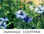 flowers of love in a mist.... | Shutterstock . vector #1131974426