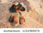 cute dog of dachshund  black... | Shutterstock . vector #1131985073