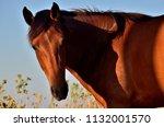 a beautiful horse | Shutterstock . vector #1132001570