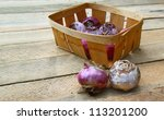 Small basket with the bulbs of dark blue hyacinths on a table - stock photo