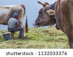 lombardy   11 lug 2018 a farmer ... | Shutterstock . vector #1132033376