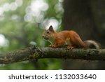 Squirrel In Light Sunny Summer...