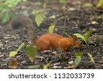 squirrel in bright sunny summer ... | Shutterstock . vector #1132033739