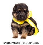 small german shepherd puppy... | Shutterstock . vector #1132040309