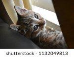 Stock photo background sleepy kitten just woken from a nap 1132049813