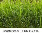 close up of a thicket of marsh... | Shutterstock . vector #1132112546
