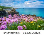 pink sea thrift flowers on the... | Shutterstock . vector #1132120826